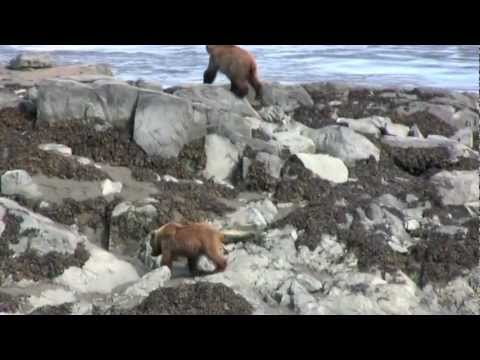 Alaska's Beauty & Wildlife 2009: A Personal Video Diary