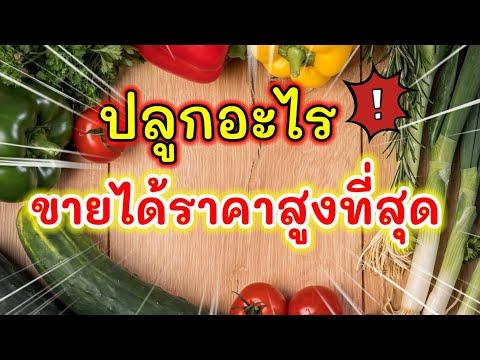 #ปลูกผักสวนครัว 10 อันดับ ผักที่ขายได้ราคาสูงที่สุด