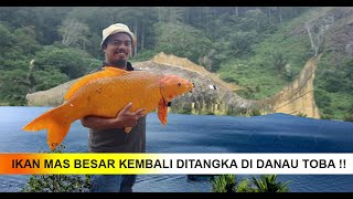 Mitos Ikan Mas Pembawa Petaka di Danau Toba, Benarkah?