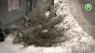 Как и когда выбрасывать новогоднюю елку, чтобы она вам потом не «отомстила»? - Абзац! - 18.01.2016(, 2016-01-18T18:41:01.000Z)