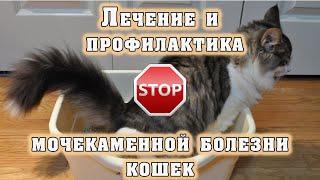 Лечение и профилактика мочекаменной болезни кошек