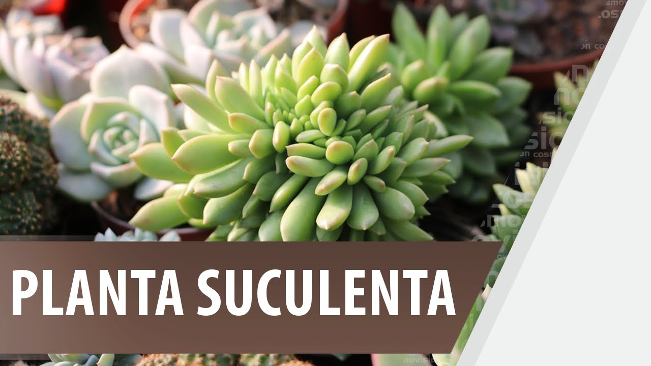 Ver fotos de plantas suculentas 33