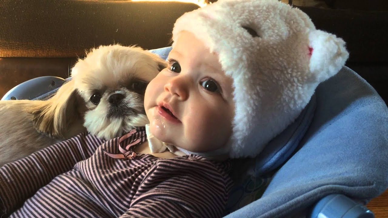 Cute Shih Tzu Dogs And Babies A Beautiful Friendship Funny And
