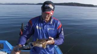 FISHING THE EDGE, FLATHEAD, WHERE TO FIND THEM.