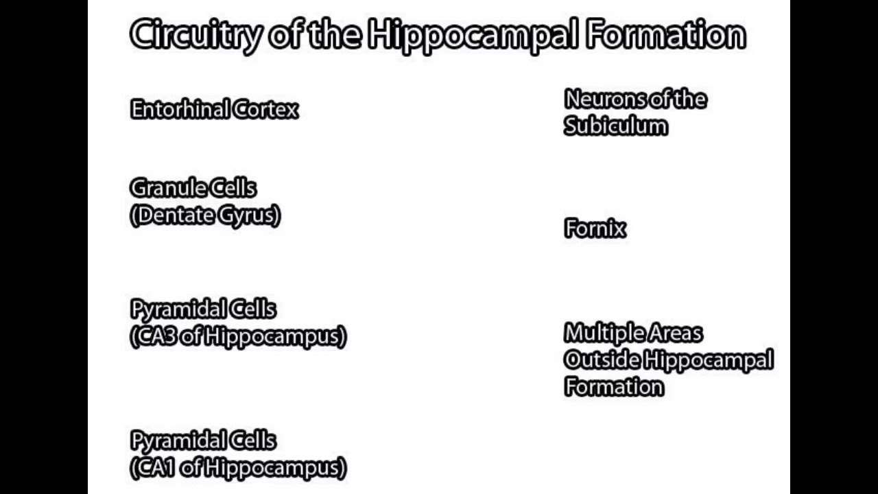 Hippocampal Formation - YouTube
