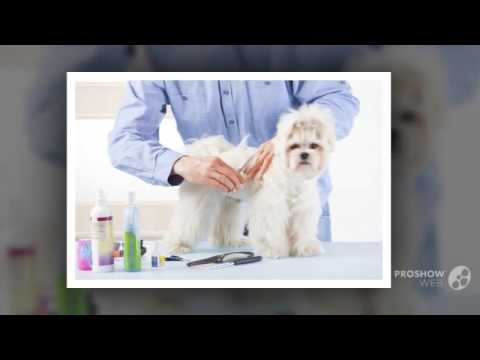 Pets First Animal Hospital – Leading Animal Clinic in Cape Coral FL