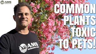 Common Toxic Plants To Pets In Phoenix