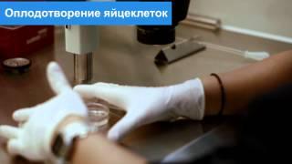 Как церковь относится к эко и репродуктивным процедурам (видео)