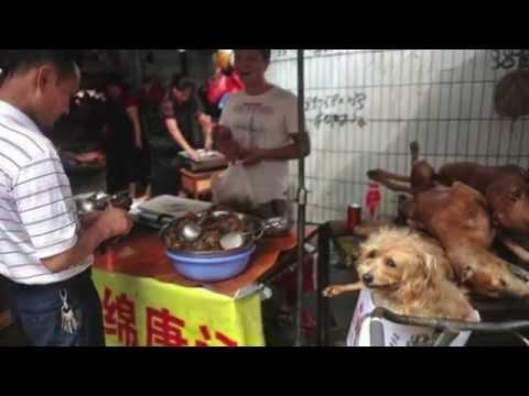 Festival De Carne De Cachorro Na China