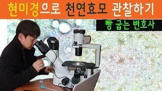 천연효모 현미경으로 관찰하기