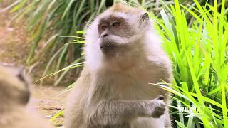 WILDLive! - Macaques - S01 E05