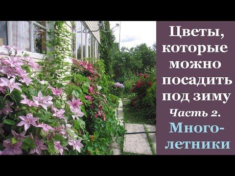 ❀ Цветы, которые можно посеять под зиму. Часть 2. Многолетники