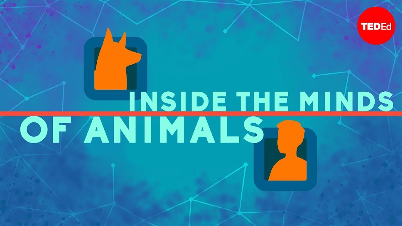 Inside the minds of animals - Bryan B Rasmussen