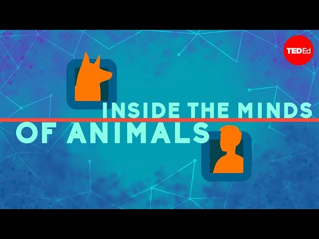Inside the minds of animals - Bryan B Rasmussen