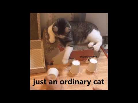 Funny cat finds ball under cup or not ?