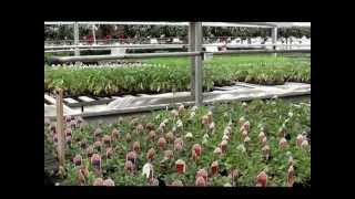 Rice Road Greenhouses and Garden Centre Tour - May 2014