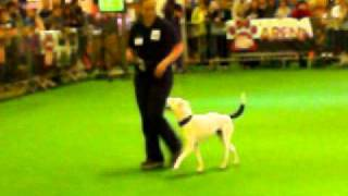 Horus Deaf Dog At Lovepets Edinburgh 1