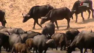 Afrikas gefährlichste Flüße - Dokumentation