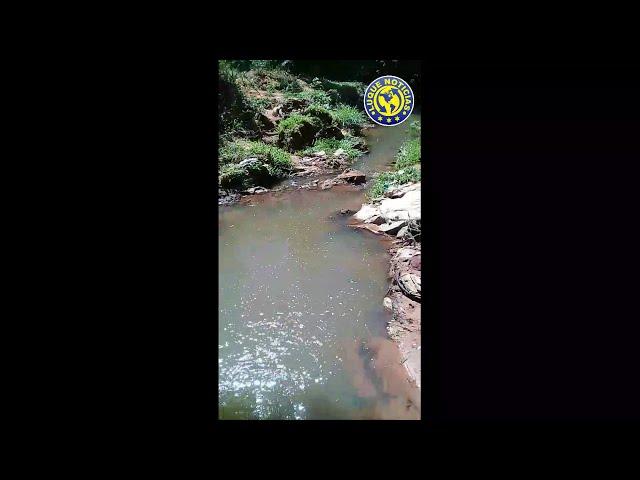 Mortandad de peces en Luque