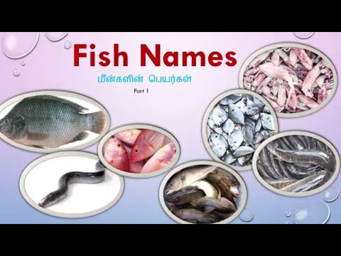 Types Of Fish Names In India With Images Tamil & English