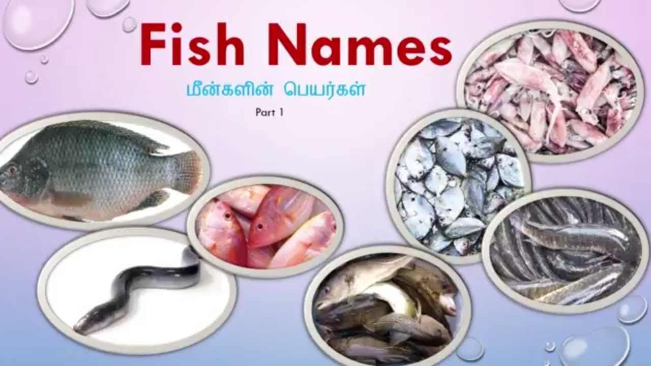 Learn Tamil Through English Fish Names With Images Youtube