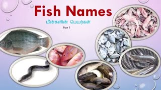 Learn Tamil Through English - Fish Names With Images Tamil & English