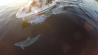 Dolphins Playing with Boat at Cullen Scotland #GoPro