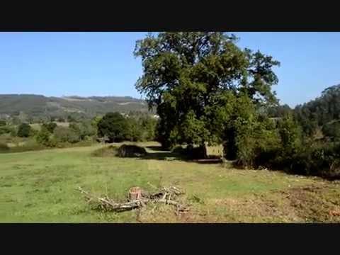 OS PRESENTAMOS EL  ROBLE DE 200 AÑOS DE SAGUDIELLU EN GRASES VILLAVICIOSA 2014