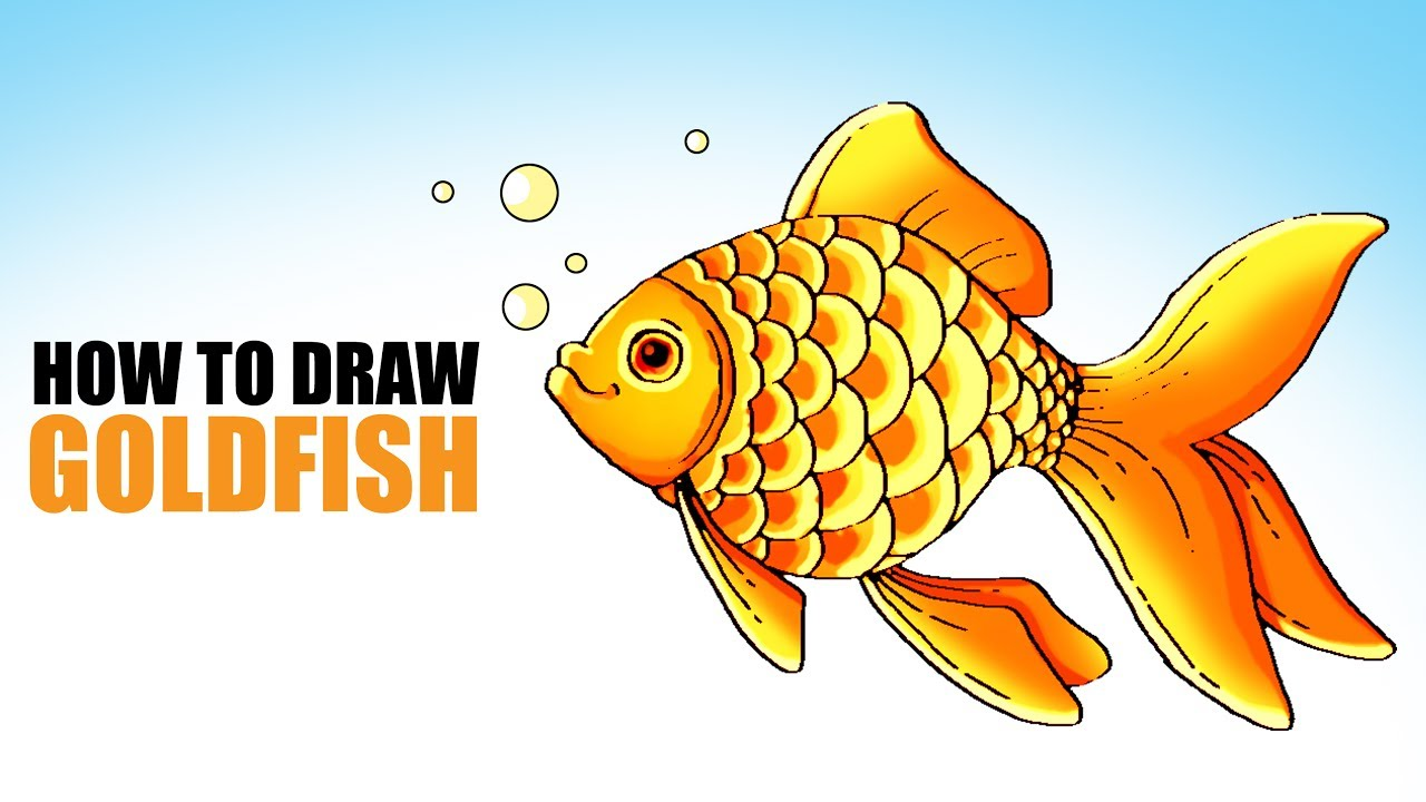 How to draw a goldfish 92