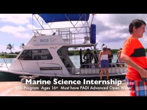 Ocean Academy: Marine Science Internship