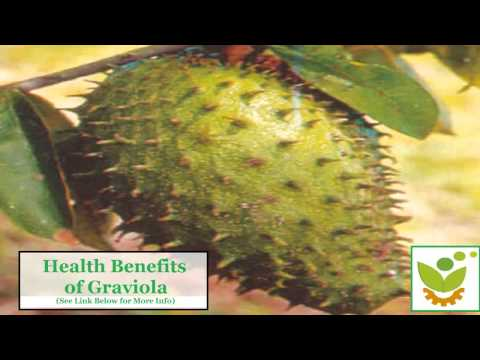 Soursop (Graviola) for Anti-Cancer: The Truth About this Amazon Rainforest Breakthrough