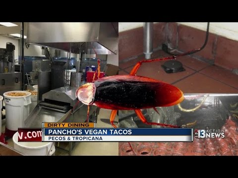 Roaches found everywhere inside Pancho's Vegan Tacos says Dirty Dining