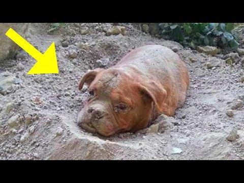 دفن الكلب حيا شااهد ما حدث