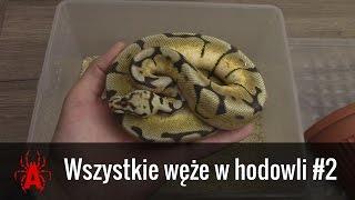 Wszystkie 🐍🐍🐍 węże w hodowli #2