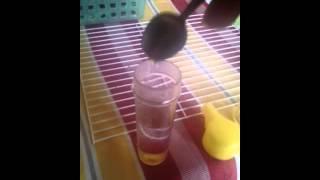 طريقة تقديم العسل للمبتدئين (للحنجرة والزكام و تطهير المعدة) -معاذ-