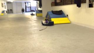 Place Command: Teaching Phase, 5 Month Old Puppy | Instinct Dog Training Nyc
