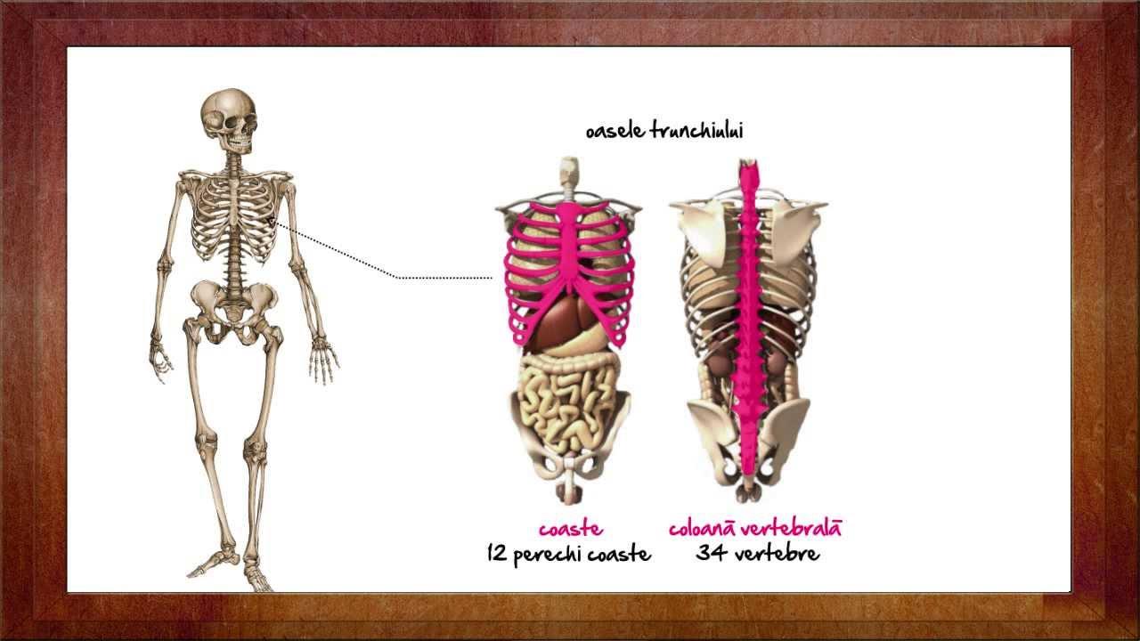 helminti în mușchii umani)