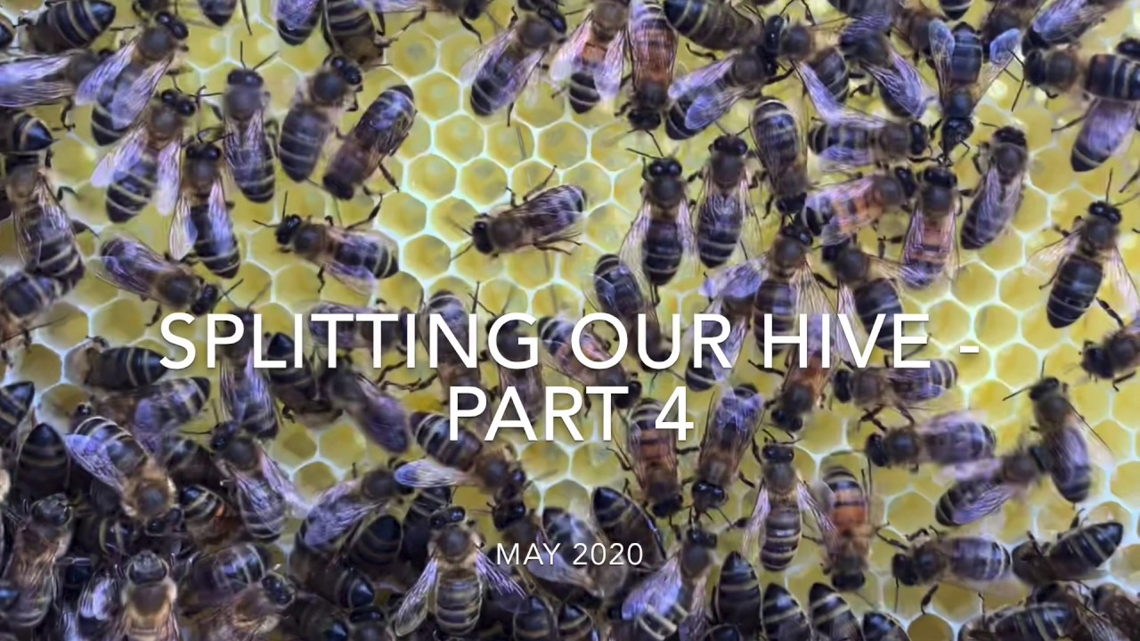 Splitting our hive - part 4