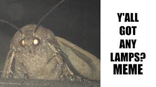 y'all got any lamps (Moth Lamp Meme)