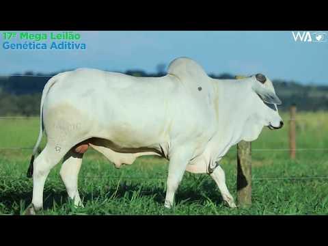 LOTE 140 - REMC A2099 - 17º Mega Leilão Genética Aditiva 2020