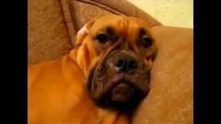 прикольные и смешные собаки. приколы 2017