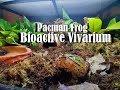 - Pacman Frog Bioactive Vivarium