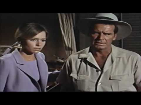 DRIVEIN S: 'THE PINK JUNGLE' 1968