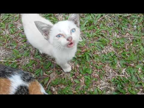 4 Hungry Kittens Meowing For Food