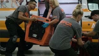 ASPCA rescues shelter animals from Hurricane Irma