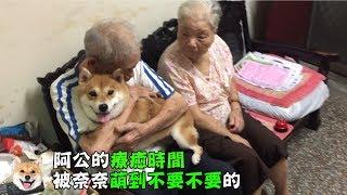 柴犬nana 奈奈 阿公的療癒時間 被奈奈萌到不要不要的