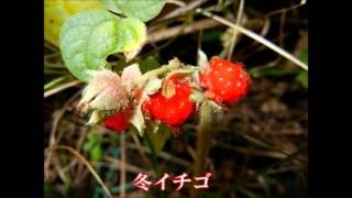 河中ー南梅本間チャレンジウォーク18㌔ 河中あい 検索動画 28