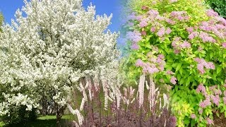 great landscaping trees shrubs and perennials 2
