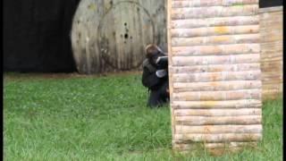 Feliz Cumpleaños Mono