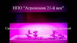 видео Светодиодные фитосветильники для растений, фитолампы, фитолинейки